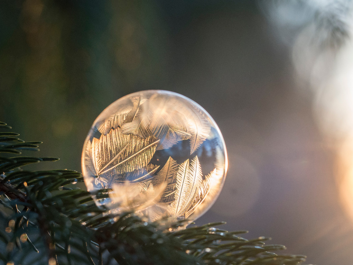 Ice bubble on pine needles